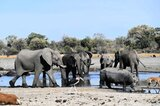 Botswana is home to some 130,000 elephants